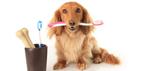 dog teeth cleaning Paradise Valley